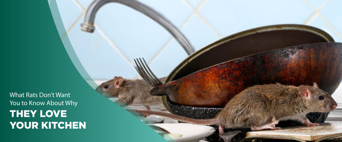 4 Ways To Keep Rodents Away From Your Kitchen