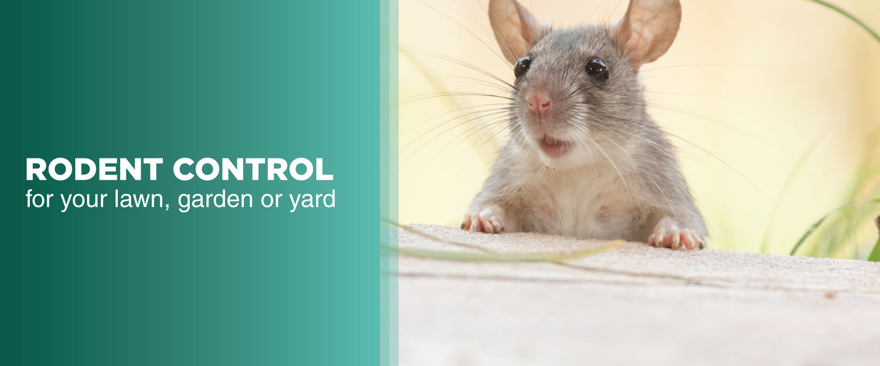Steps to Rodent Proof Your Garden