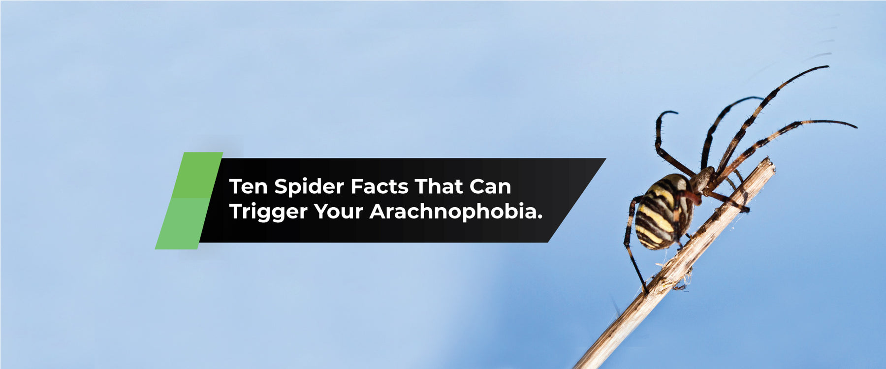 Ten Spider Facts That Can Trigger Your Arachnophobia