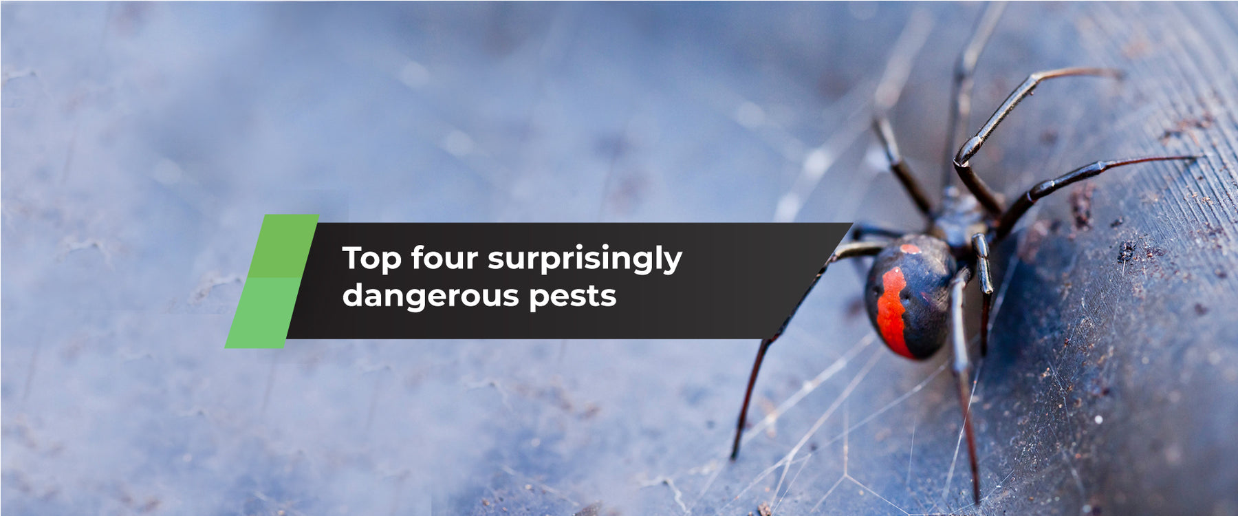 Top Four Surprisingly Dangerous Pests