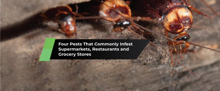 Four Pests That Commonly Infest Supermarkets, Restaurants and  Grocery Stores