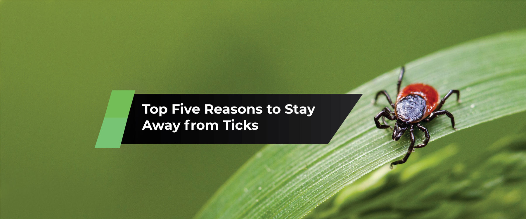 Top Five Reasons to Stay Away from Ticks