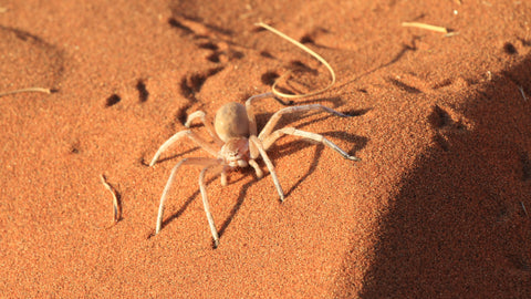 Spiders can be found almost everywhere around the world