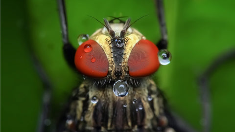 A housefly has eyes that can detect even the slightest movement around it
