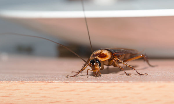Prevent Entry Of Pests