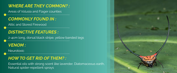 The Orb Weaver Spider