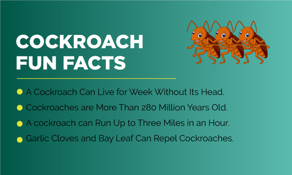 COCKROACH FUN FACTS
