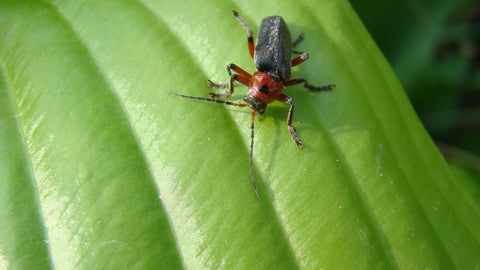 THE MOST ADAPTABLE INSECT ON EARTH