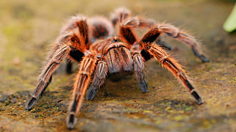 Spiders are getting angrier due to climate change
