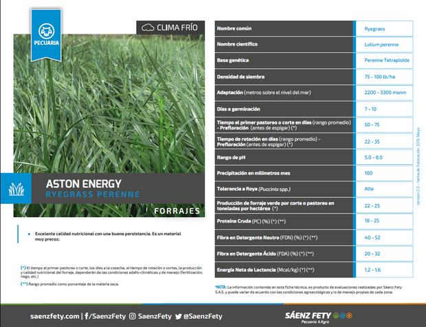 RYEGRASS PERENNE ASTON ENERGY