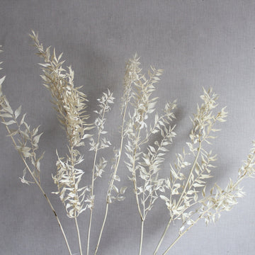 A bunch of dried white ruscus stems available at Rook & Rose
