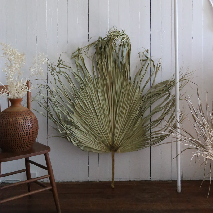 Extra large natural dried palm available at Rook & Rose