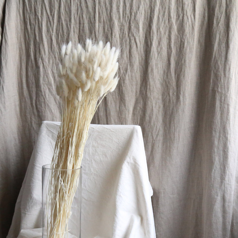 A bunch of dried white bunny tail grass available at Rook & Rose