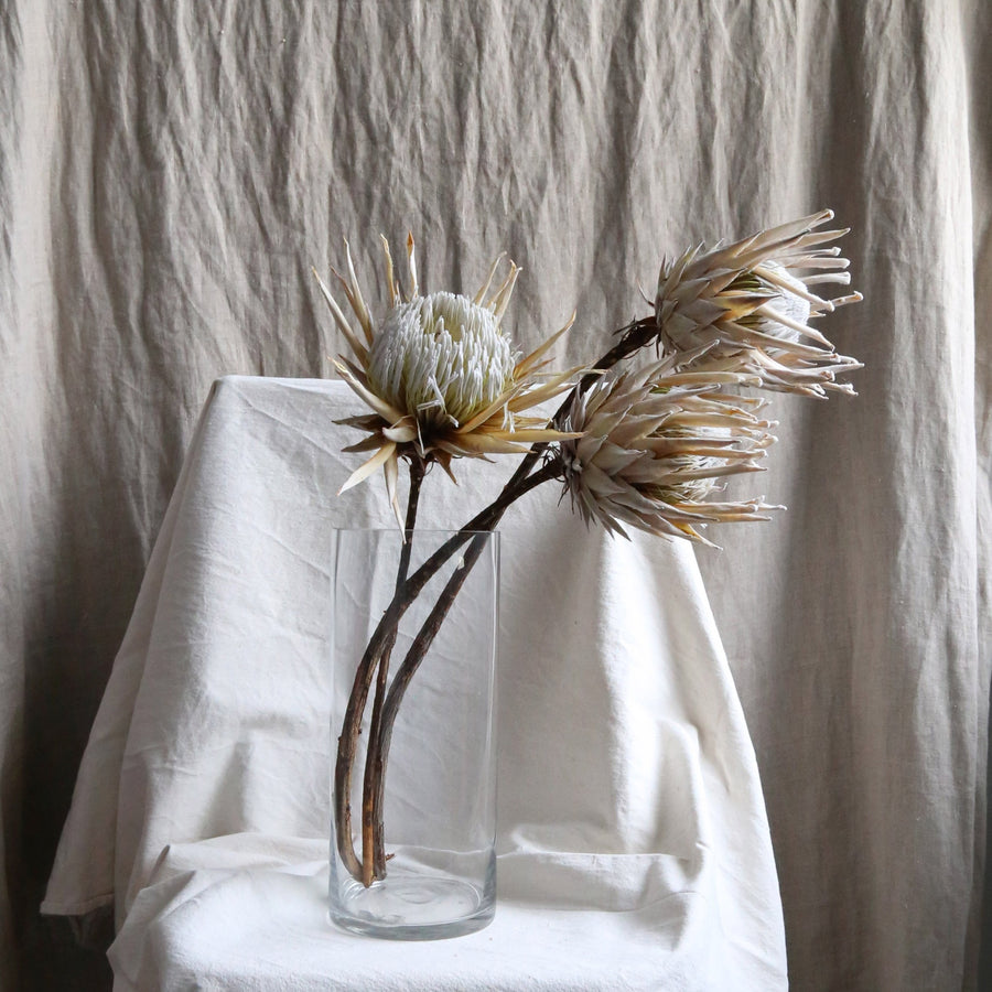 Dried protea stem available at Rook & Rose