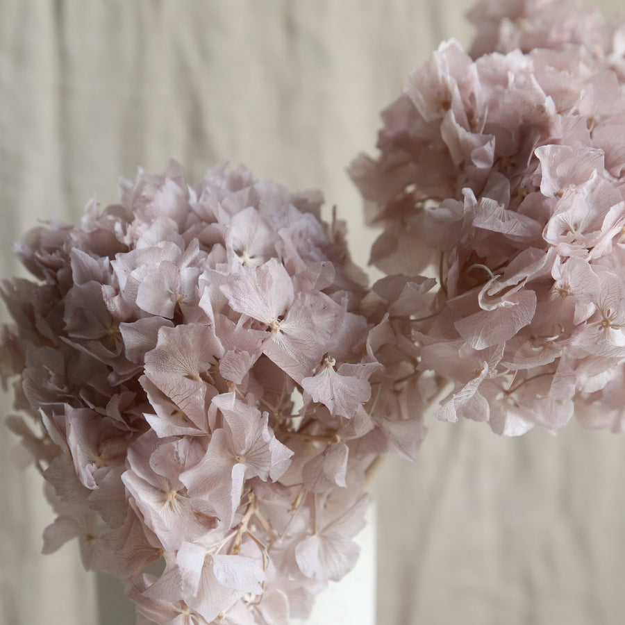 Lilac preserved hydrangeas available at Rook & Rose in Victoria BC.