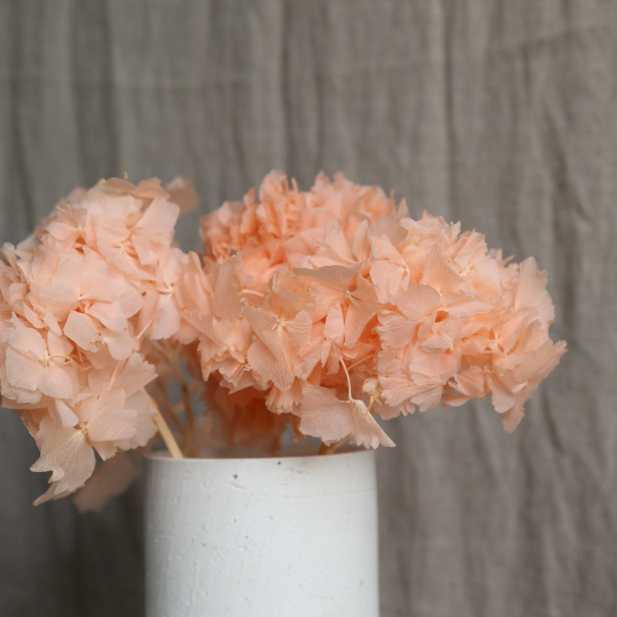 Peach preserved hydrangeas in white textured vase available at Rook & Rose in Victoria BC.