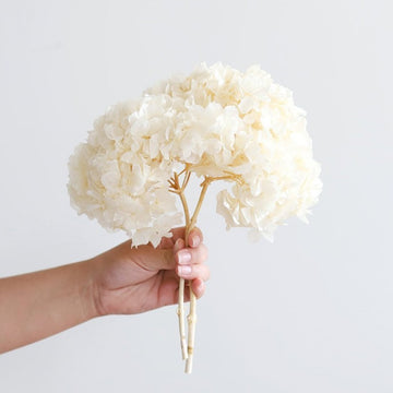 Dried white hydrangea stem available at Rook & Rose