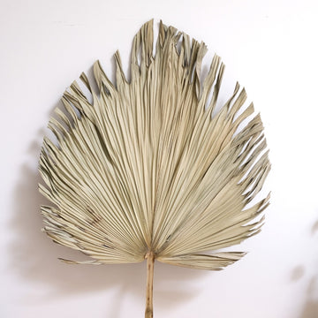 Extra large natural dried spear palm available at Rook & Rose.