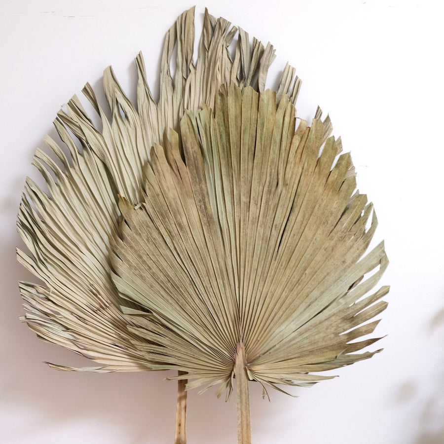 Extra Large Natural Dried Spear Palm - 1 Stem