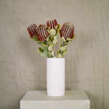 Red mini banksia stem in a white vase available at Rook & Rose