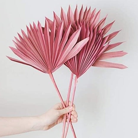 A bunch of dried pink fan palms available at Rook & Rose