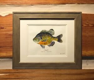 Bluegill Bream