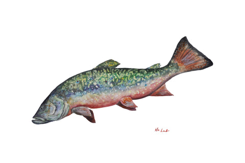 Original - Brook Trout