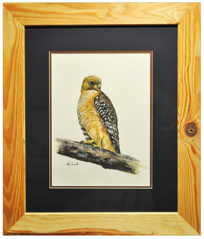 Original Coopers Hawk