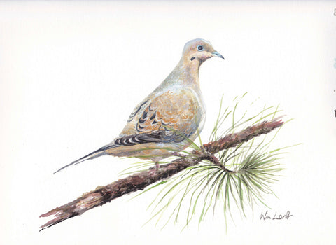 Giclee - Mourning Dove