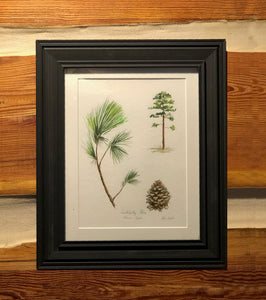 Loblolly Pine Botanical
