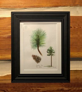 Long Leaf Pine Botanical