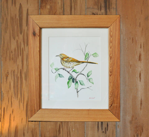 Original Brown Thrush