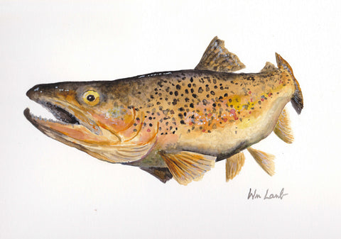 Print - Brown Trout