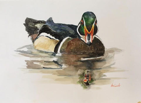 Original Relaxed Woodduck