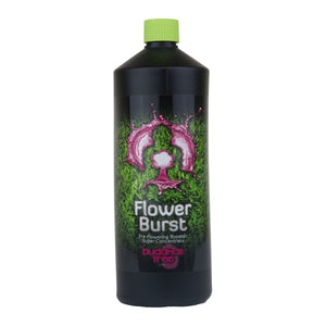 Buddhas Tree Flower Burst - Grow Power Hydroponics
