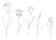 Load image into Gallery viewer, Tulip colouring sheets
