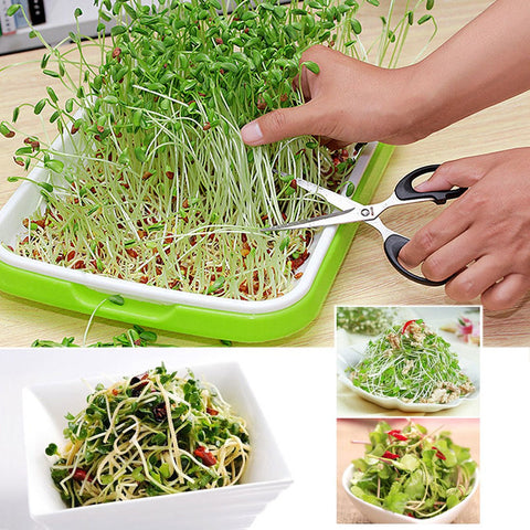 Image of Vibrant Health Sprouting Tray