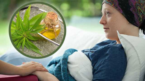 While the value of cannabinoids in the palliative treatment of cancer is accepted due to their antiemetic and anti-nausea properties, there is an increasing body of evidence that demonstrates THC's anticancer properties.