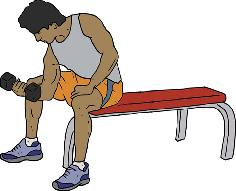 Dumbbells with Bench Exercise