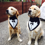 Tuxedo with Black Tie Bandana - FunDogBandanas