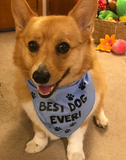 BEST DOG EVER Bandana - FunDogBandanas