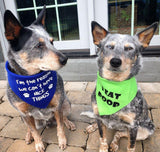 I'm the reason we can't have NICE THINGS Bandana - FunDogBandanas