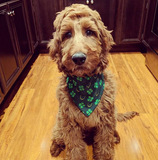Luck of the Irish Bandana - FunDogBandanas