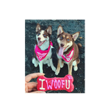 2 Huskies wearing hot pink pearl necklace bandanas.