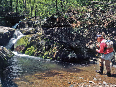 Mountain Trout Streams Fly Fishing Report - Update June 22, 2018