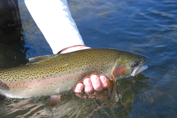 Delayed Harvest and Large Stocked Trout Streams Fly Fishing Report- November 20, 2017
