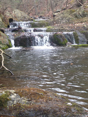 Mountain Trout Streams Fly Fishing Report- January 29, 2018