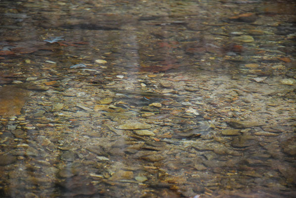 Mountain trout streams fly fishing report for Trouts fly fishing reports