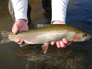 Stocked Trout Streams Fly Fishing Report- January 9, 2020