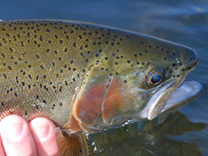 Stocked Trout Streams Fly Fishing Report - January 14, 2021